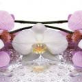 Панель Лиловая Орхидея полноцветный 244x60см